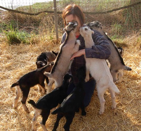 goat group hug