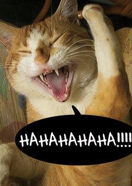 hahaha cat