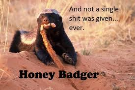 honey badger, don't give a shit