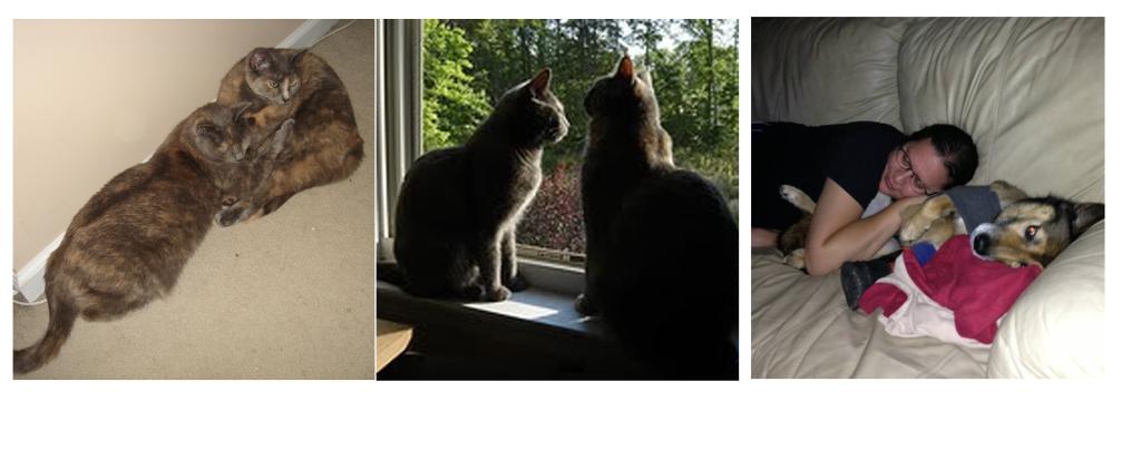 cats, dog