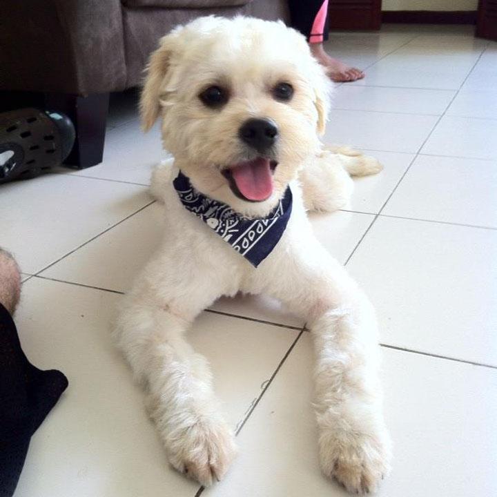 rescue pup, rescue dog, rescue stories, animal rescue