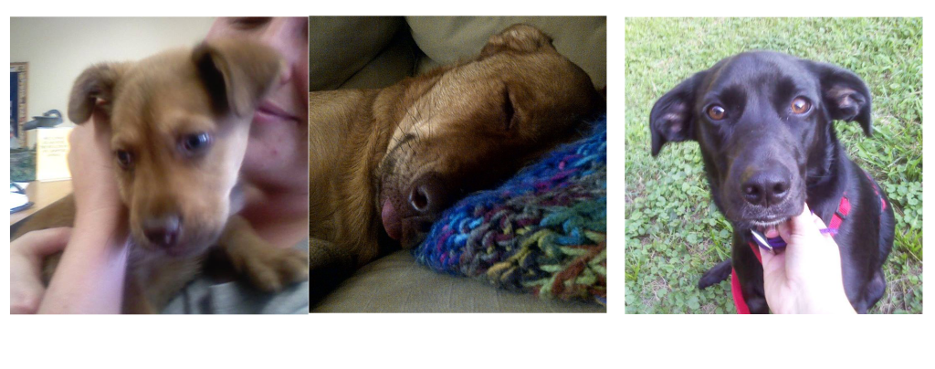 animal resue story, pit bull sheppard rescue